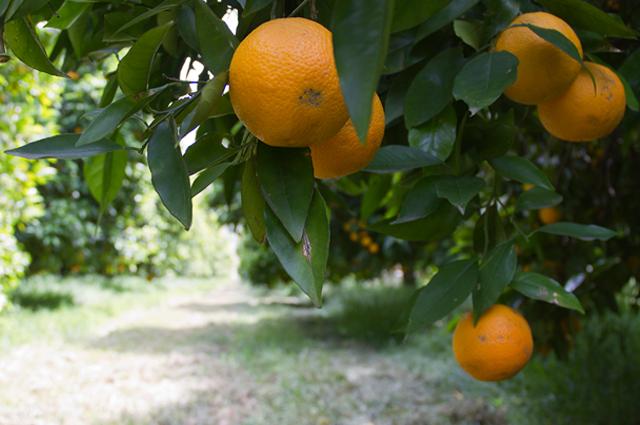 #9 Oranges