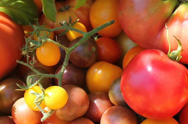 #8 Tomatoes