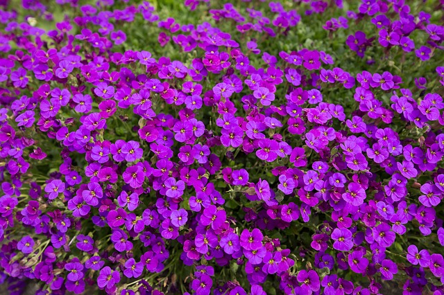 #3 Bedding Plants, Color And Herbaceous Perennials