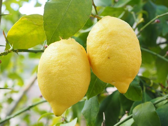 #6 Lemons